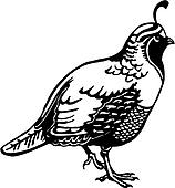Available as a PRINT  Quail Clipart